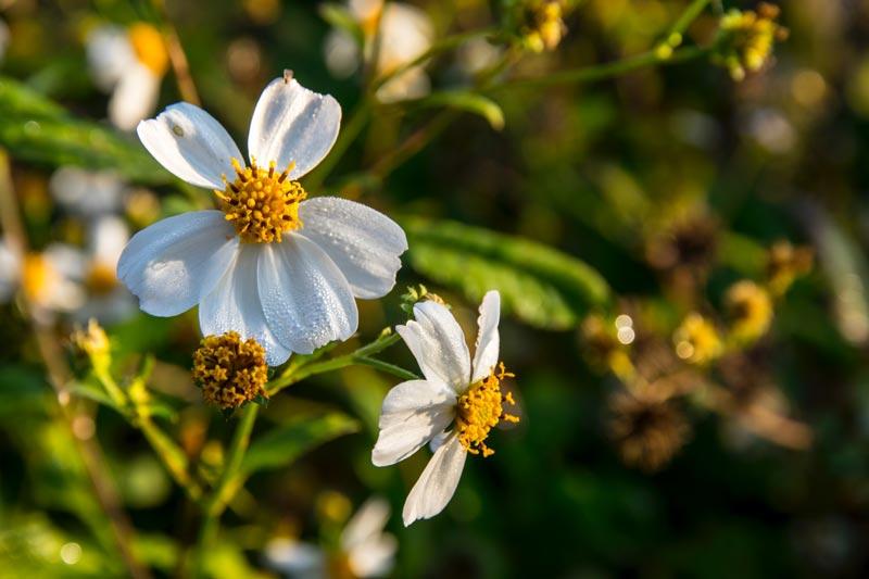 proteger tu casa del polen
